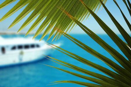 The yacht's steering wheel sails on the seawith palm leafs