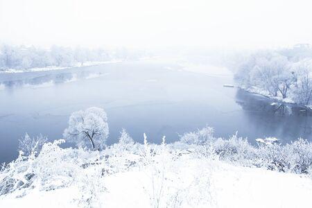 una bella foresta invernale blu alberi