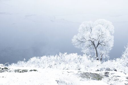 a blue winter forest trees