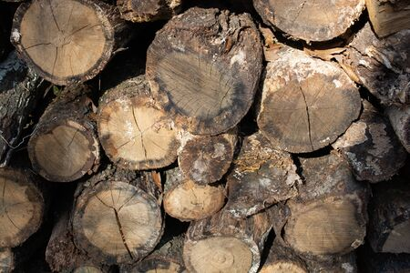 Cut tree stump surface as a background texture