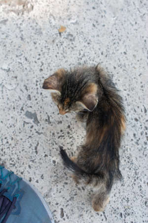 Portrait of striped cat, Stray homeless catourdoors in street
