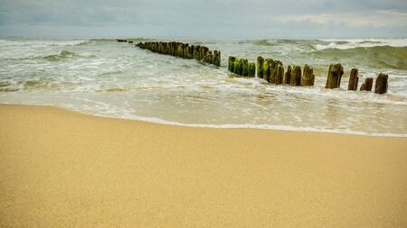 Wooden piles overgrown with algae, stuck in the shoreline of the sea, protection against waves. Stok Fotoğraf