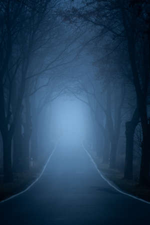 Fog between trees along the main road. Poor visibility during evening driving. The mystical landscape is created by the evening fog passing between the trees. Stock Photo