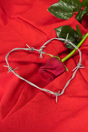 limitation: Barbed wire heart-shaped and rose on red background