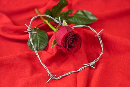 Barbed wire heart-shaped and rose on red background