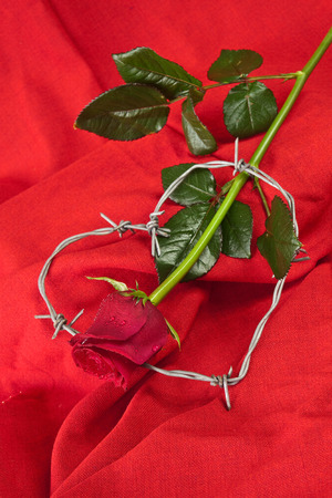 Barbed wire heart-shaped and rose on red background photo