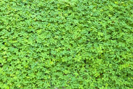 tiny: Tiny Green Leaves Background