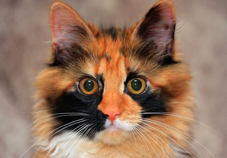 cat head: red cat head eyes