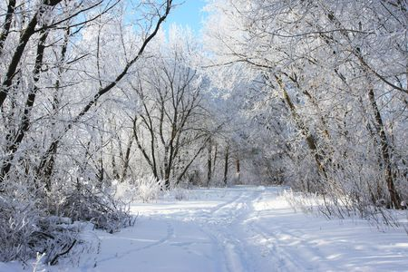 cold winter snow forest tree frozen Stock Photo - 3137593