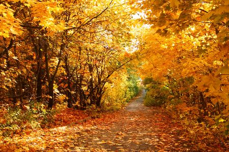The road through the autumnal park. Yellow trees.