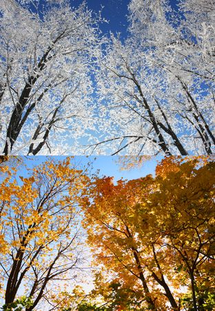 Winter and autumn. Branches with orange leaves and snow branches. photo