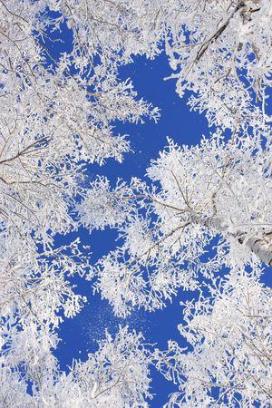 Snow branch photo