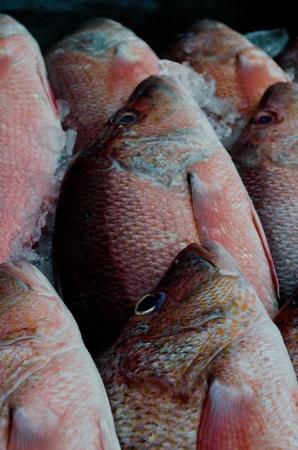 phuket food: fresh red sea bass at sea food market in Phuket Stock Photo