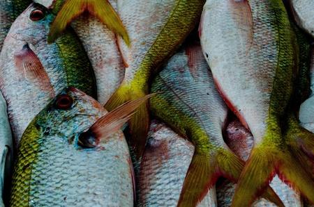phuket food: fish at sea food market in phuket