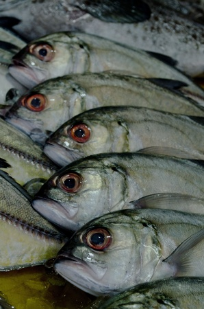 row of Mackerels at a seafood market in Phuket photo