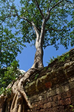 angkor thom: ruin of Ta Prohm, Angkor Thom Stock Photo