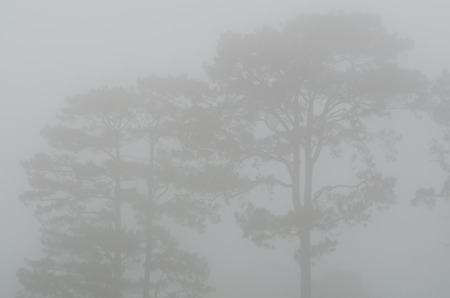 Bäume im Nebel Standard-Bild - 63386735