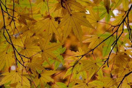 Japanischer Garten im Herbst Standard-Bild - 67137880