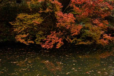 Japanischer Garten im Herbst Standard-Bild - 70195282