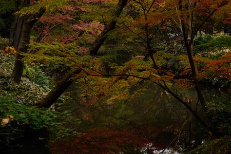 Japanischen Garten im Herbst Standard-Bild - 70195526
