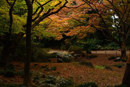 japanese garden in autumn