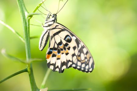 metamorphosis: Portrait of a Butterfly.  Metamorphosis. Stock Photo