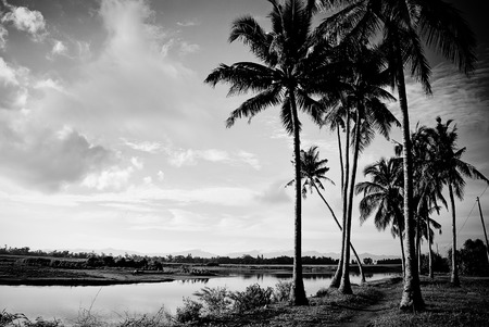 landscape riverside: Farmland along the riverside at the countryside. Hinigaran, Negros Occidental.