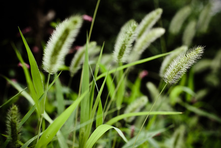 overcast: Green grass in overcast light Stock Photo