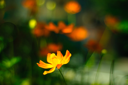 yelllow: Focused flower with background in bokeh