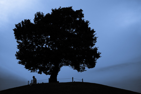 blue hour: Man sitting under the tree at the top of the hill in silhouette during the blue hour.