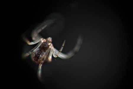 reverse: Macro of a spider in its web using reverse lense Stock Photo