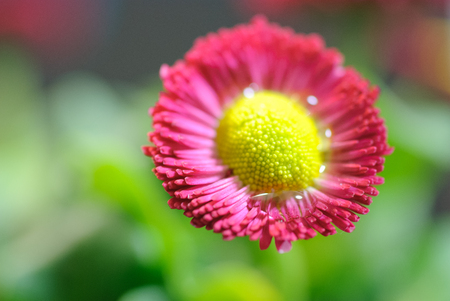50mm: Macro photography of a red flower Stock Photo