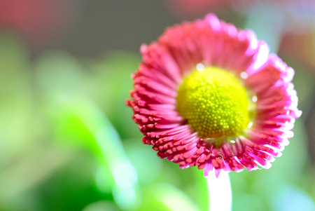 Macro photography of a red flower Stock Photo
