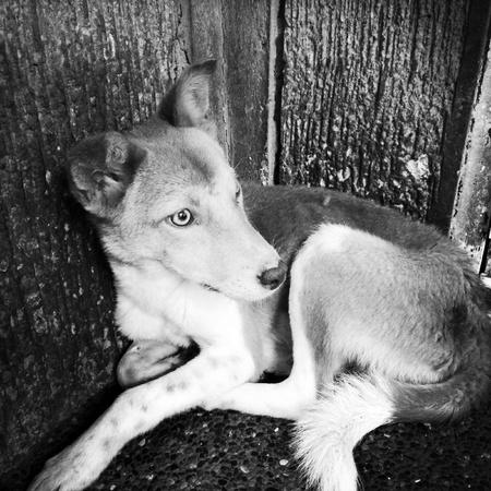 white dog: Mans best friend. Stock Photo