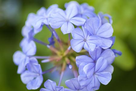 blooms: Purple flower blooms Stock Photo