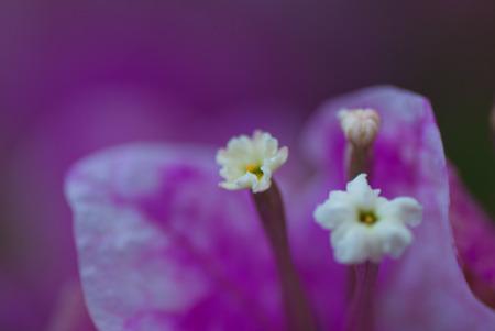 upclose: Purple