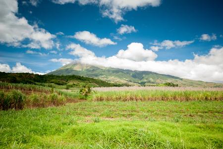 mt: Mt. Canlaon
