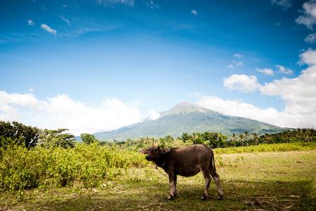 mt: Philippine volcano Mt. Canlaon