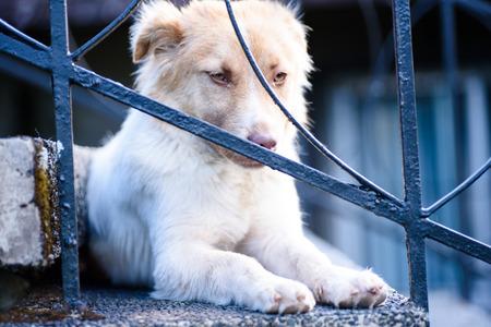 Portrait of a pet dog.