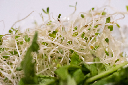 sprouted: Sprouted and green leafy vegetable salad.