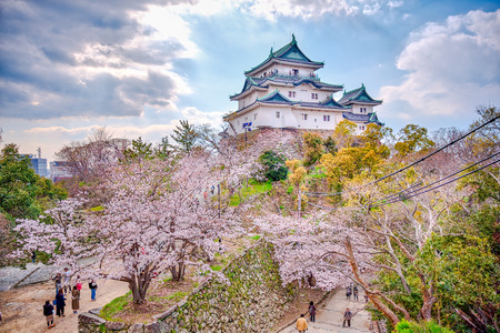 Wakayama Castle standing atop the hill with cherry blossoms in the foregound.