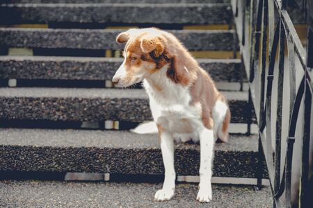 Cute dog guarding the stair entrance of the house. Stock fotó - 135494192