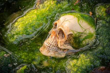 green algae: still life of human skull on green algae