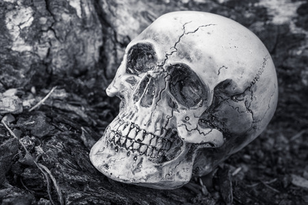 corpse flower: still life of human skull on dried tree background, Black and white style