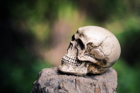 corpse flower: Still life,skull human on tree stump, Art and background