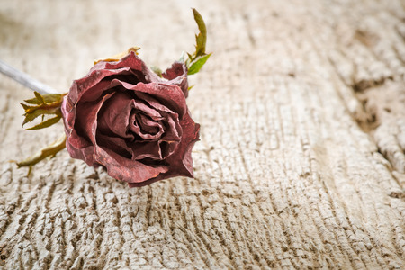 flower head: Dry Red Rose on Old Wooden Background Stock Photo