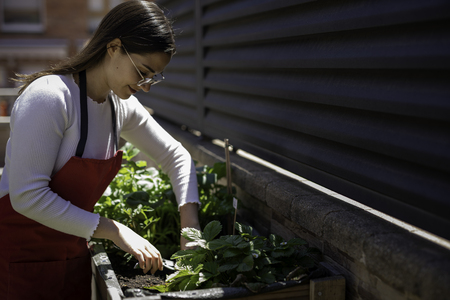 Beautiful woman taking care of urban vegetables garden also known as urban farm or rooftop garden Stockfoto