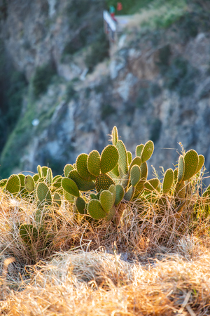 Wild cactus view with blurred background during sunset with copy space Stockfoto