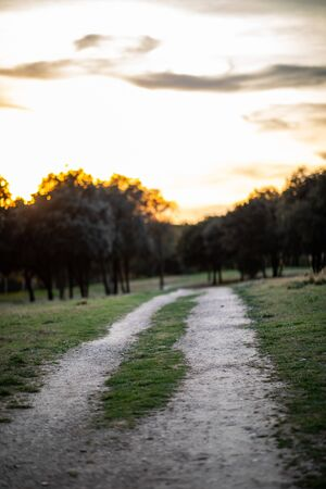View of a park walking path with green grass and green trees and sunset sky in background