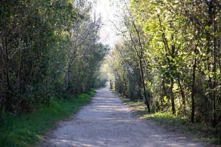 View of a walking path with green trees at both sides
